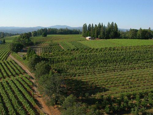 El Dorado Wine Country by Unique Aeriography