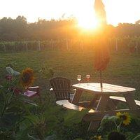 Sun setting on the vines.