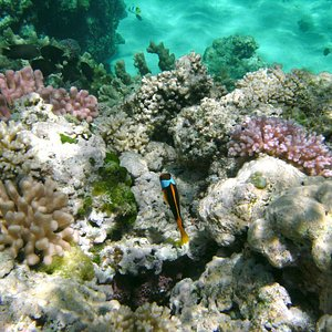 l'aquarium naturel