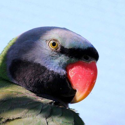 Gorgeous parrot in the free flight aviary
