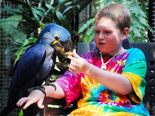 Michal feeding Hyacinth macaw