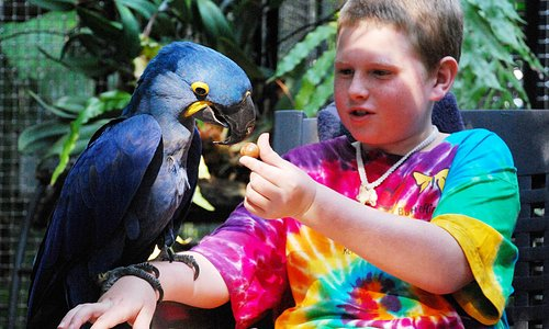 Michal feeding Hyacinth macaw