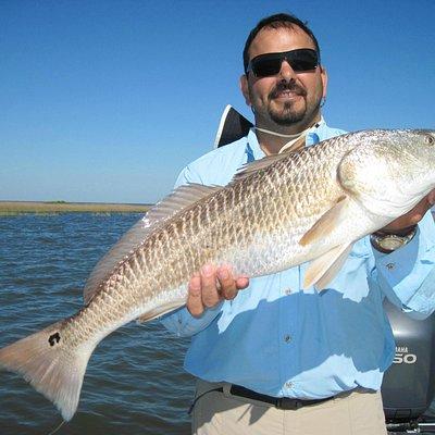 bull red fish