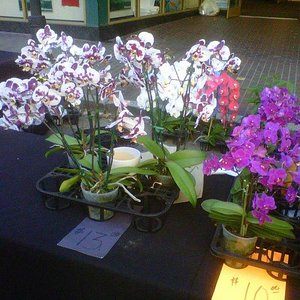 Beautiful orchids for sale at the Farmer's Market, my favori