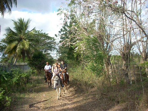 Riding horses on trail