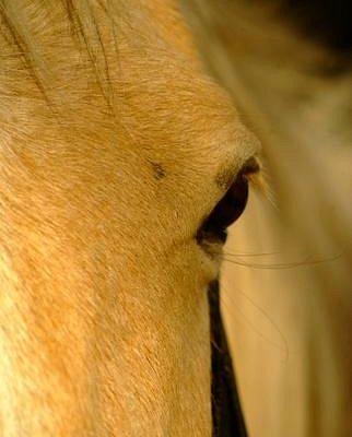 Savanna Horse Whispers