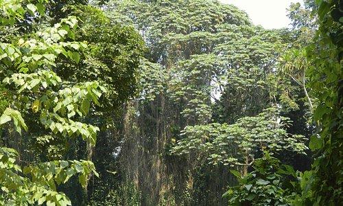Entebbe Botanic Garden