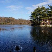 石神井の語源となった(?)三宝寺池の湧き水
