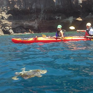 sea turtle-caldera