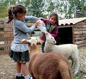 Ferme de Découverte Saint-André biberons-agneaux