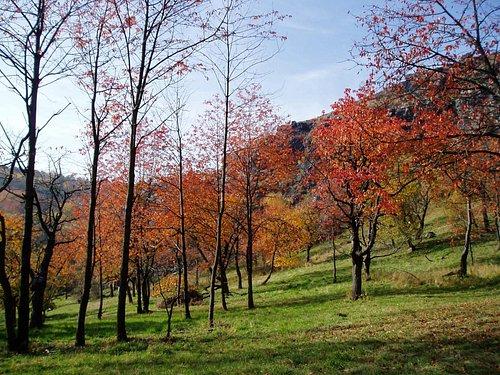 Sarka valley in October