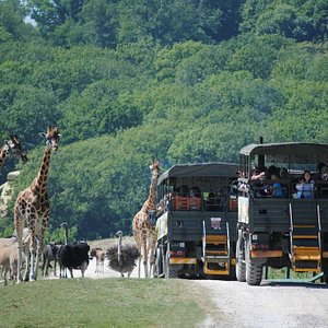 Safari on The African Experience