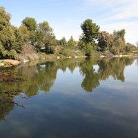 Quiet reflection - Davis Arboretum pond