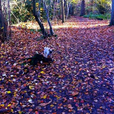 Woody trail