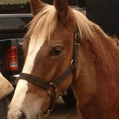 West London Stables - Riding Lessons for Adults & Children