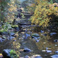 Mackenzie River, fall colors