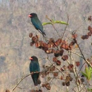 Bird Watching at Thattekkad Salim Bird Sanctuary from Tabernacle Home Stay