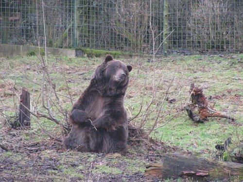 Bear Tierpark winter time