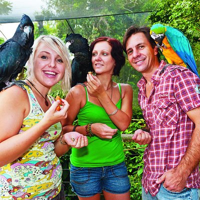 Photo provided by Birdworld Kuranda