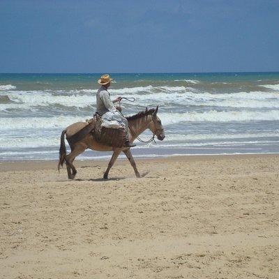 Cavalgando pela praia