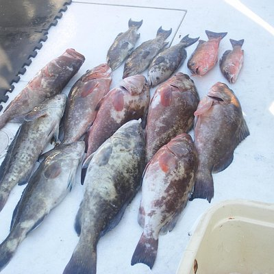 Our day's catch!
