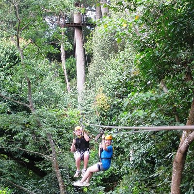 Zipline fun and forest canopy view