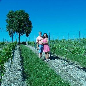 Our Pennsylvania vineyard