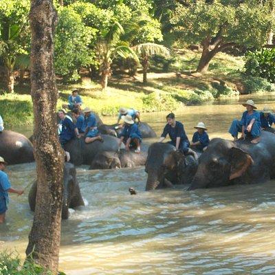 Show Elephant Bathing