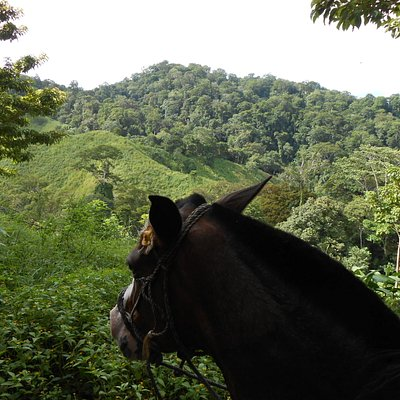 Mountain Horse Tour