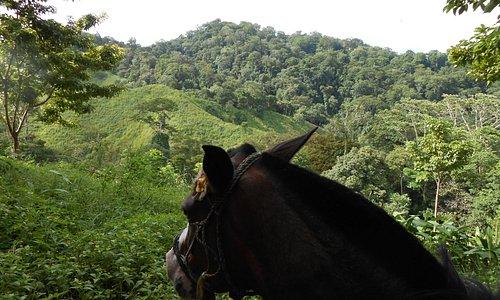 Mountain Horse Tour