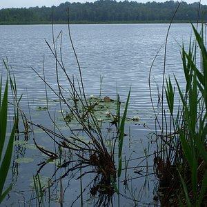 lake in the Poleski national park