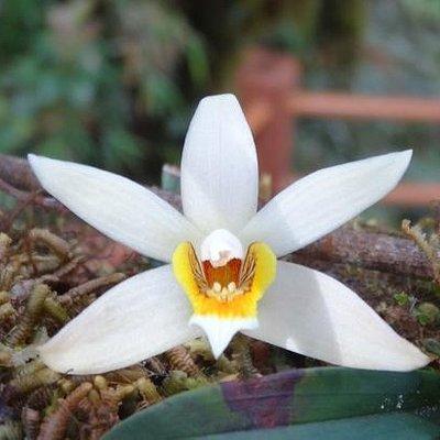 wild orchid near boardwalk