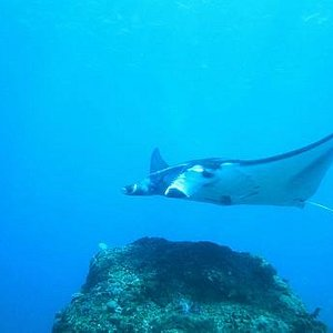 Manta Point with with Dive Dive Dive Bali