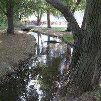 A small creek flows through the park