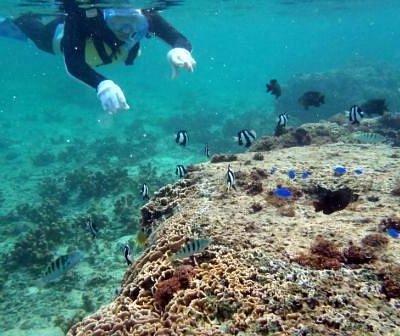 色鮮やかな熱帯魚たちと一緒に!