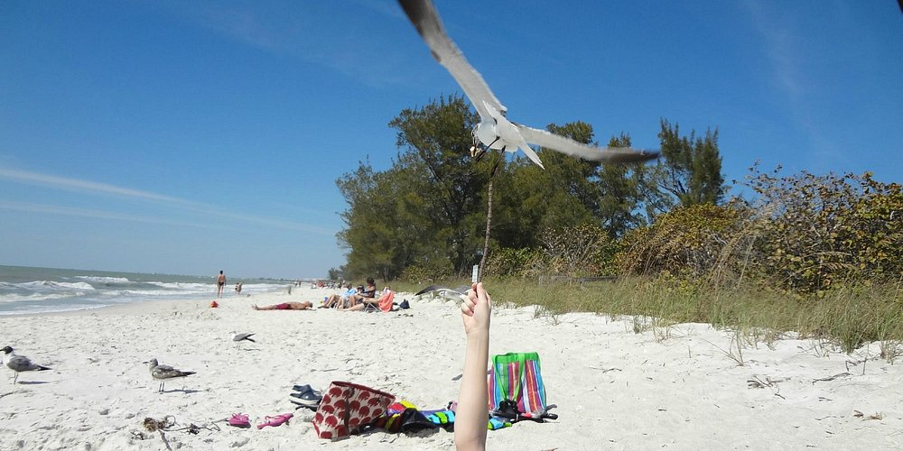 my son put a piece of bread on a stick and the seagull ate it off and then pooped on him