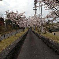 桜満開 ゴーカート 二人乗りで500円!