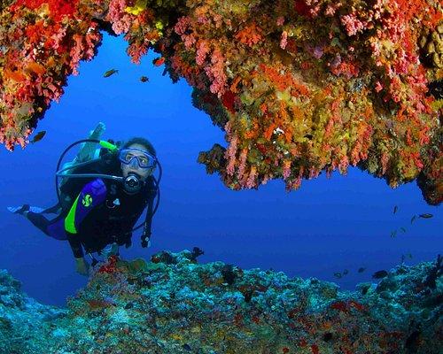 Diving in Musandam, Oman