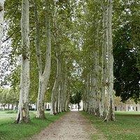 le parc/the park