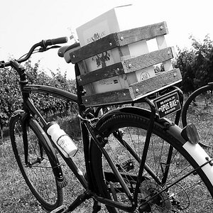 Farm Dog Cycles wine tours, cycling tours