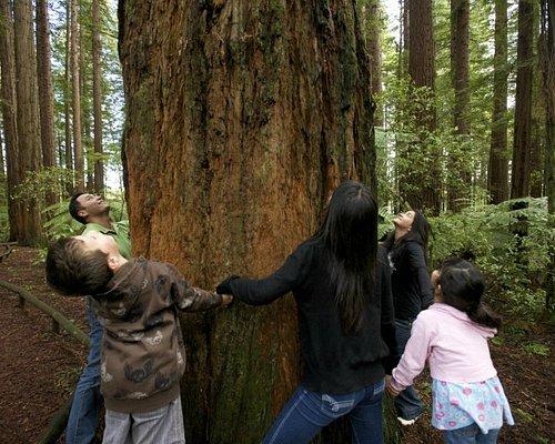 Redwood Memorial Grove