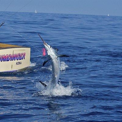 Fishing Charters Kona Hawaii