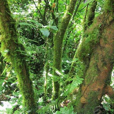 Nyungwe park. (Waterfalls track), Gisakura reception center
