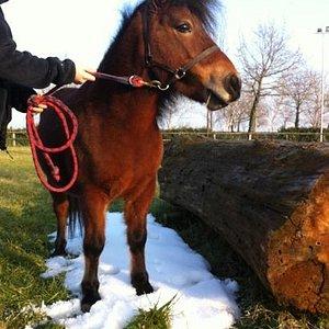 """pony club, scuola di equitazione, agonismo ! solo a """"La Torretta""""!!!"""