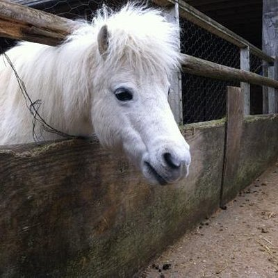 Gorgeous little pony