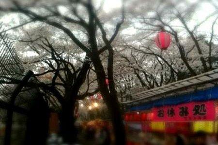 桜の花見場所として有名です。