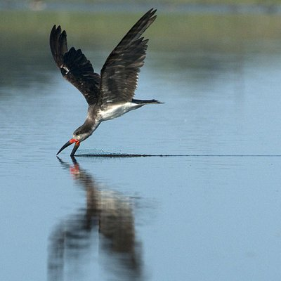 birding with Chile Tours