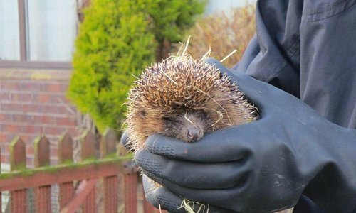 A sweet, patient little female hedgy held while we learned.