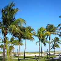 Palm trees on Lummus park beach
