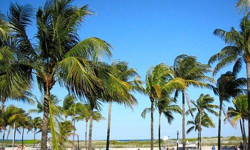 Palm trees on Lummus park beach